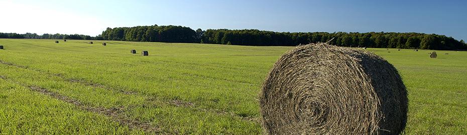 Agrar-Service - Newsletter für Landwirte
